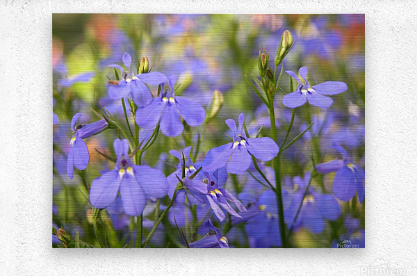 Blue Flowers Photograph  Metal print