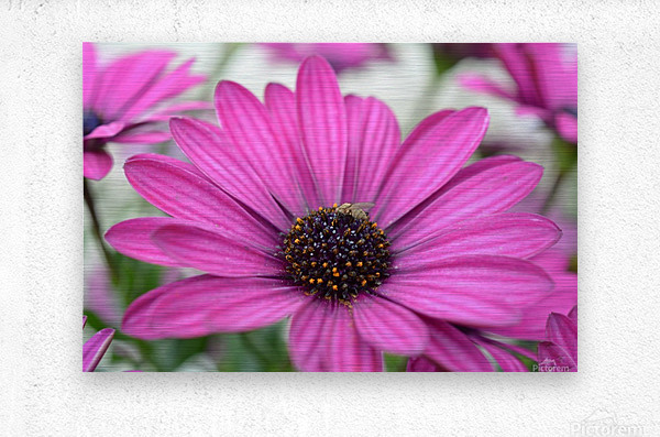 Purple Flower Photograph  Metal print