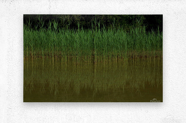 keep it green  Metal print