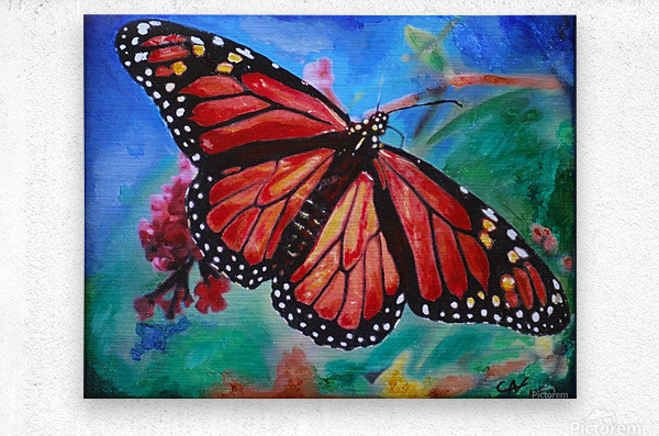 Colorado Butterfly  Metal print