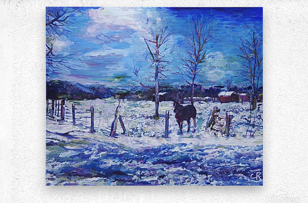 Horse in Colorado Winter  Metal print
