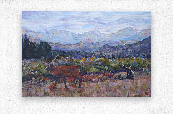 Rocky Mountain Park Elk   Metal print