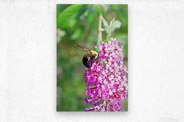 Bumblebee on a Flower  Metal print