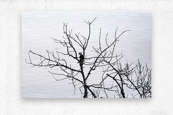 Pileated Woodpecker - Large  Metal print