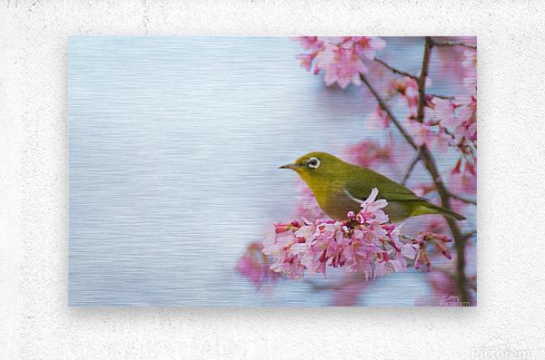 Bird In Sakura Cherry Blossom Tree  Metal print