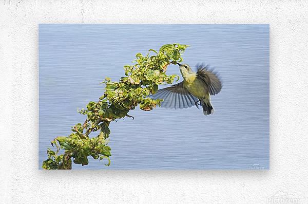 Flight moment  Metal print
