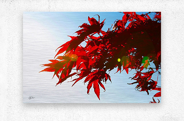 Chinese Maple  Impression metal