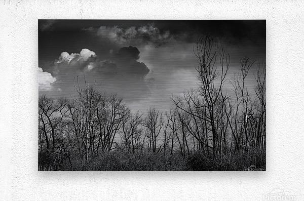 Magee Marsh 1  Metal print