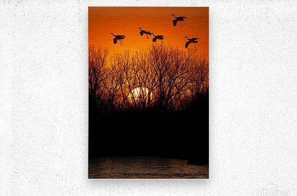Dawn patrol over the Platte  Metal print