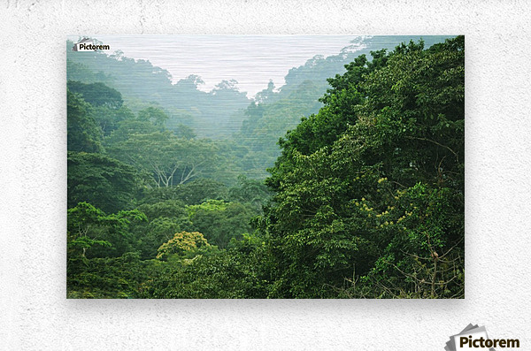 Rainforest Canopy  Metal print