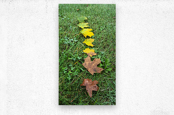 Stages of Life  Metal print