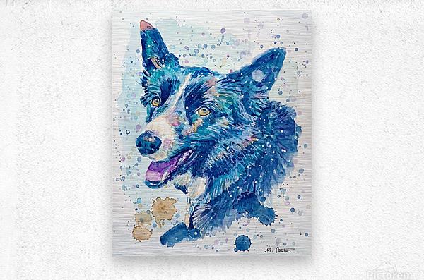 Border Collie Dog - Portrait of Habbey  Metal print