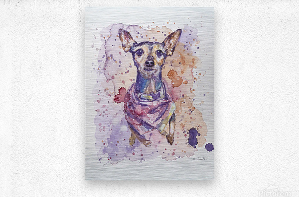 Chihuahua - Portrait of Gigi  Metal print