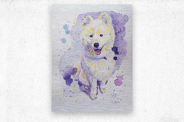 Samoyed Dog - Portrait of Juno  Metal print