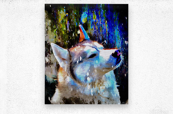 Husky Enjoying the Snow  Metal print