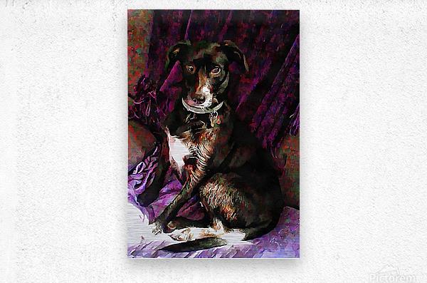 Purple Posing Puppy  Metal print