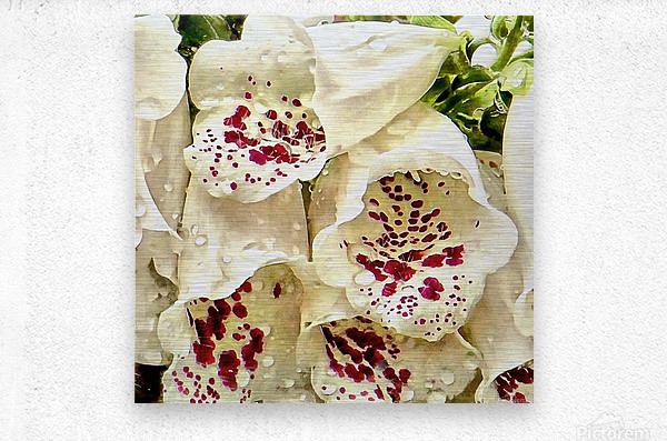 White Foxgloves with Raindrops  Metal print