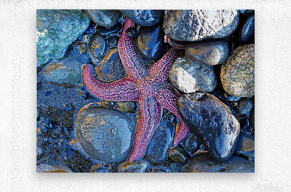 Low Tide Starfish  Metal print