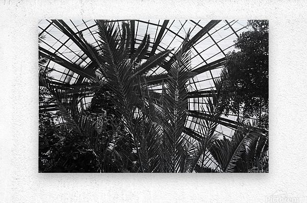 Bell Isle Conservatory Dome 1 BW  Metal print