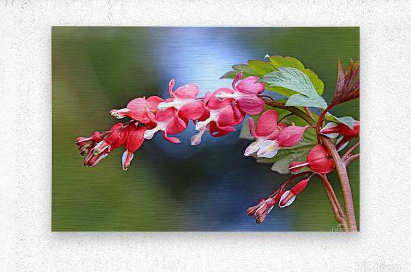 Natures Red Hearts  Metal print