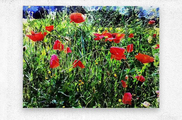 Green Pasture With Red Poppies  Metal print