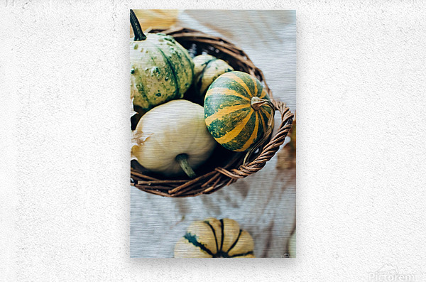 Green pumpkins  Metal print