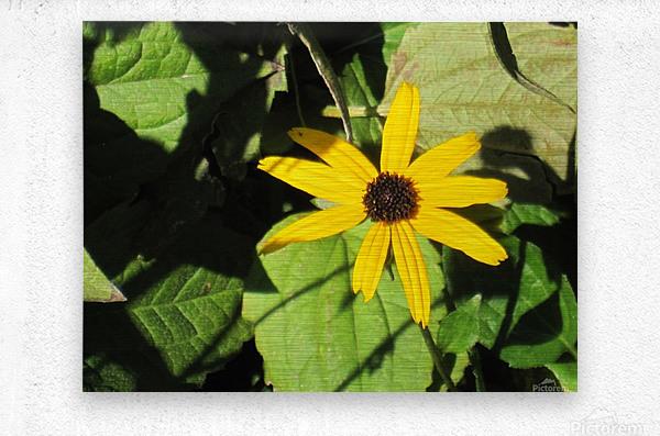 Flowers (62)  Metal print