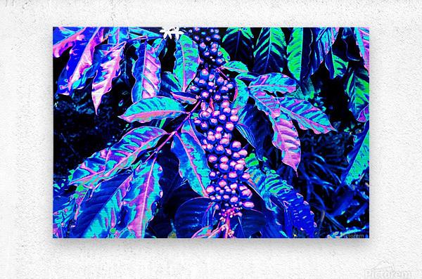 Coffee Berries  Metal print