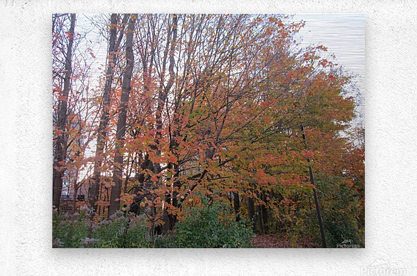 Fall Season (11)  Metal print