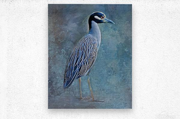 Night Heron Blues  Metal print