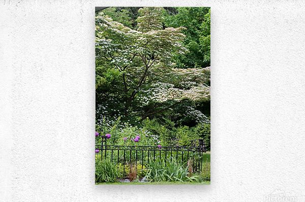 Garden with Dogwood 2018  Metal print