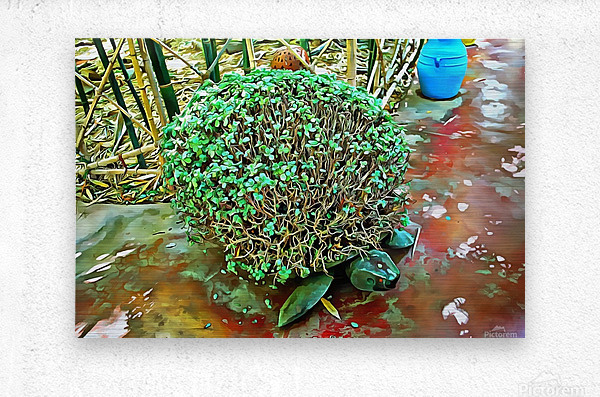 Turtle Pot At Majorelle Gardens  Metal print