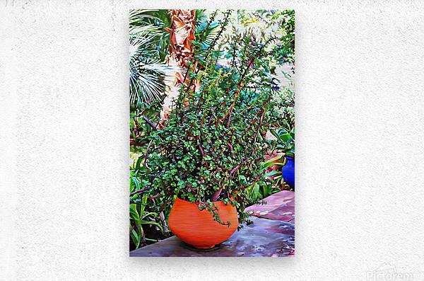 Colorful Plant Pots Marrakesh 10  Metal print