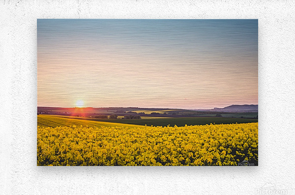 Beautiful sunset over the yellow rapeseed field.  Metal print