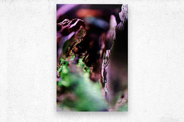 DSC03143  Metal print