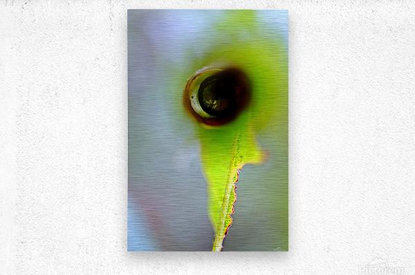 Curled Leaf 03  Metal print