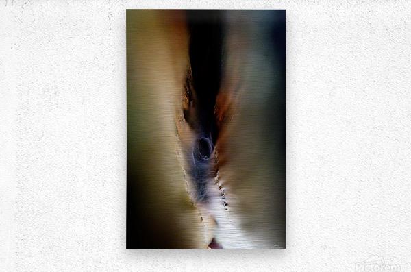 Abstract Macro Nature Photography 85  Metal print