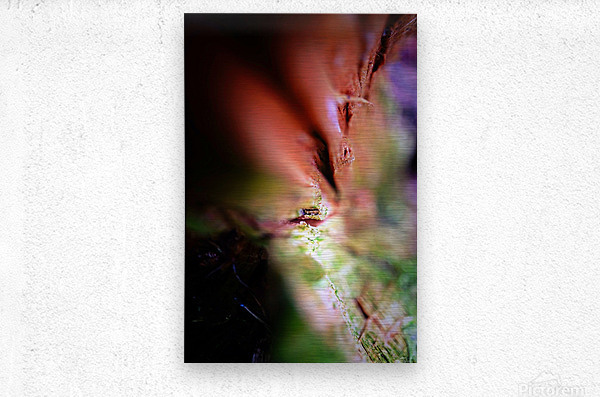 Abstract Macro Nature Photography 84  Metal print