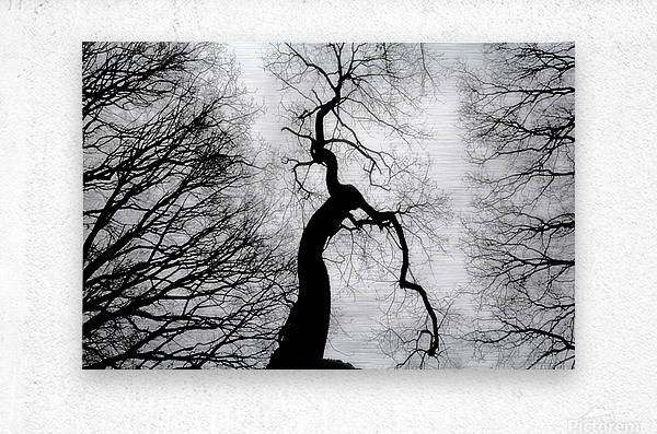 Black and White Abstract Tree 02  Metal print
