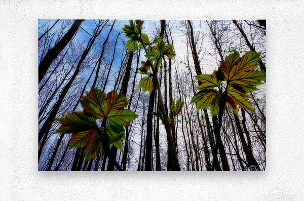 Green and Colourful Nature Scene  Metal print