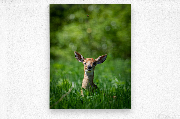 The Fawn and the Bumblebee  Metal print