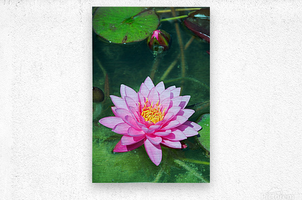 In the pond  Metal print