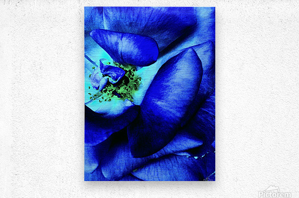 Art of the blue rose 3   Metal print