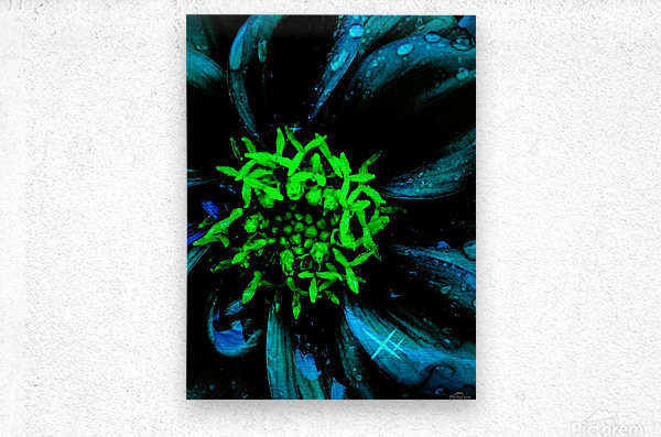 Pedals of Nights  Metal print