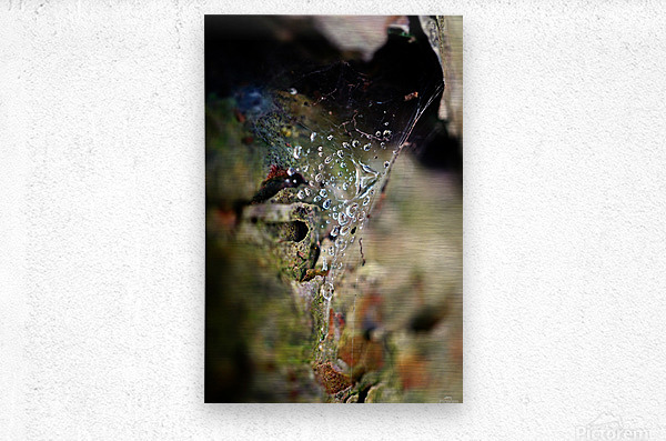 Macro Raindrop Photography Art 44  Metal print