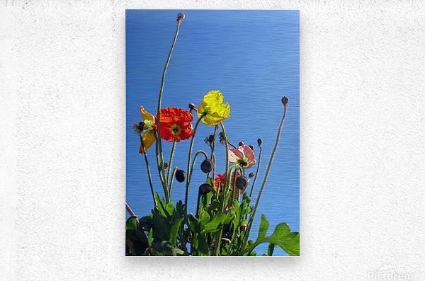 Spring Sky Garden  Metal print