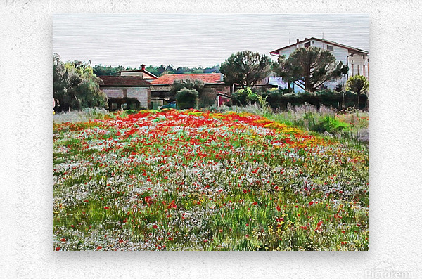 Old Farm House With Poppies  Metal print