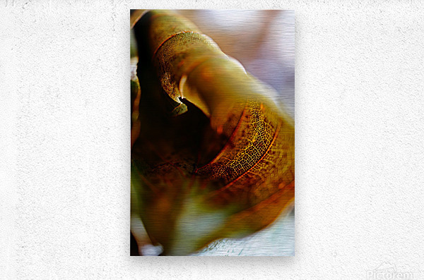 Abstract Mystic and Colourful Leaf 05  Metal print