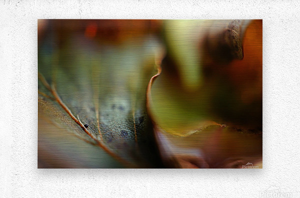 Abstract Mystic and Colourful Leaf 03  Metal print