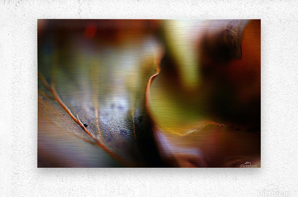 Abstract Mystic and Colourful Leaf 01  Metal print